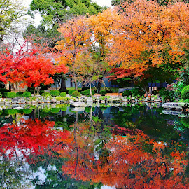The autumn silence by YanYan Kow - City,  Street & Park  City Parks ( temple, orange, park, autumn, kyoto, fall, reflections, trees, leaves, maple,  )