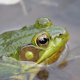 by Jonathan Drezner - Animals Amphibians
