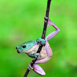 good position by Arman Setiawan - Animals Amphibians