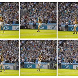 Sheff by Joe Butler - Sports & Fitness Other Sports ( leinster senior final 2011 )