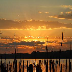 Sunrise Warmth by Roger Becker - Landscapes Sunsets & Sunrises ( clouds, nature, waterscape, sunset, trees, sunrise, landscape )