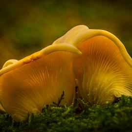 Fungi in moss by Peter Samuelsson - Nature Up Close Mushrooms & Fungi