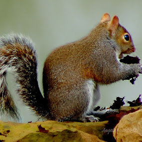 Hickory Nuts Lunch Special! by Angela Faith - Animals Other Mammals ( animals, nature, wildlife, squirrel, hickory nots )