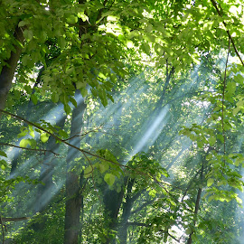 Barbecue's smoke seen by the sun... by Stefan Sorescu - Landscapes Forests ( tree, forest, light, smoke,  )