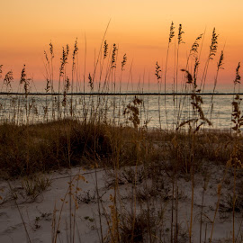 Sunset at the Point by Barton Bishop - Landscapes Sunsets & Sunrises ( sand, orange, point, dunes, sunset, gulf, sea oats, beach, alabama, landscape )