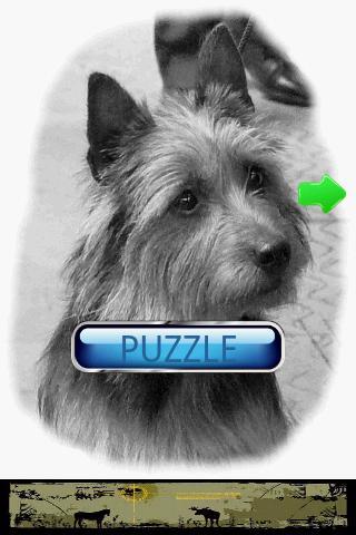 【免費休閒App】狗狗拼圖:澳大利亞梗-APP點子