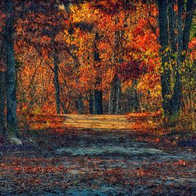 Autumn Has Arrived by Bill Tiepelman - Nature Up Close Trees & Bushes ( orange, change, driveway, wentzville, vibrant, road, leaves, landscape, woods, spring, rural, fall leaves on ground, fall leaves, missouri, color, new melle, autumn, seasons, foliage, fall, path, trees )