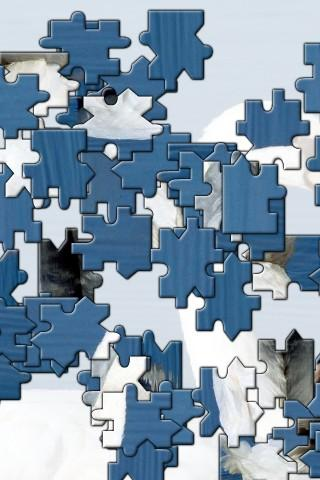 Alligator Jigsaw Puzzle