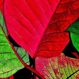 by Deborah Arin - Nature Up Close Leaves & Grasses