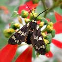 Tiger Moth.