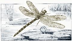 dragonfly-illustration