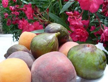 fruits giens