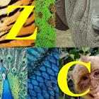 ZooConnector icon