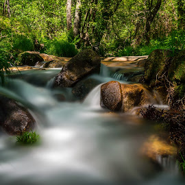 In the stream by Ricardo  Guimaraes - Nature Up Close Water ( water, stream, nature, crisp, fresh, shadow, hidden, long exposure, forest, portugal, light, close,  )