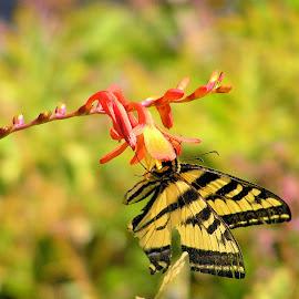 Butterfly by Glenda Koehler - Novices Only Wildlife