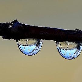 Rain drops by Denton Thaves - Nature Up Close Natural Waterdrops ( raindrops )