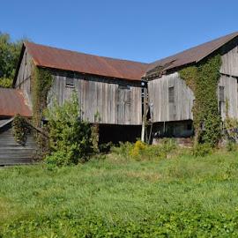 Old  Forgotten Barn by Dee Matthews - Digital Art Things