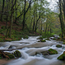 Wondrous forests XIII by Zoran Rudec - Landscapes Waterscapes ( forest, torrent )