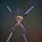 Colorful Arachnid