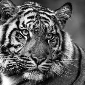 by Renos Hadjikyriacou - Black & White Animals (  )