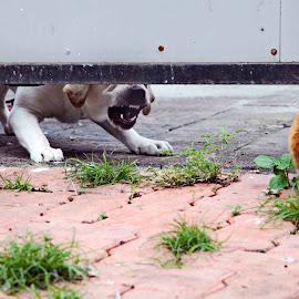 Old Rivalry. by Varun Joel - Animals Other Mammals ( cats, dogs, fighting, street photography )