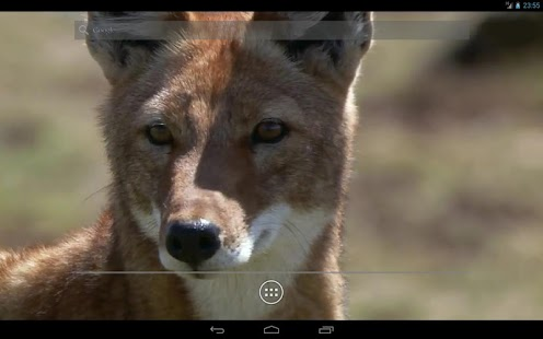 Fox Live Wallpaper - screenshot