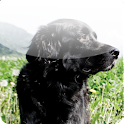 Natural Dog Health icon