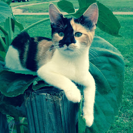 Just laying around by Nakia Earhart - Novices Only Pets ( cats, cell, lazy, sun, calico cat )