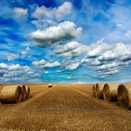 Alpacas redondas 7 by Eduardo Menendez Mejia - Landscapes Prairies, Meadows & Fields ( redondas, uk, reondas, tokina 12-24, cambridgeshire, alpacas, menendez, eduardo, nikon, d5100, cambridge, inglaterra )