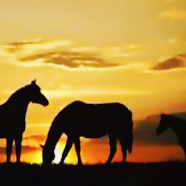by Kim Rogers-Krahel - Animals Horses ( horses, sunset, tennessee )