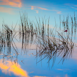 Grass in Pond by Ed & Cindy Esposito - Nature Up Close Leaves & Grasses ( clouds, orange, bridgewater, sunset, serene, lake nippenicket, trees, lake, quiet, massachusetts )