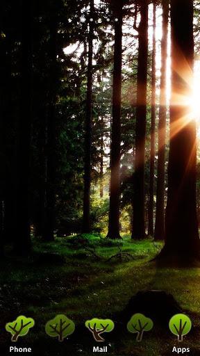 [AL] Sunray Through Woods