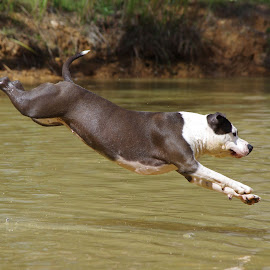 by Kris Pate - Animals - Dogs Playing
