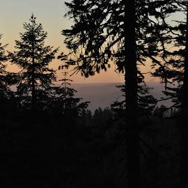 Sunset in Yosemite by Jane Singer - City,  Street & Park  Skylines