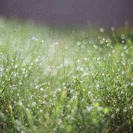 by Beverly Zabawskyj - Nature Up Close Leaves & Grasses ( film, grass, dew, morning, bokeh )