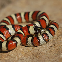 Snakes of the United States - Center for Snake Conservation