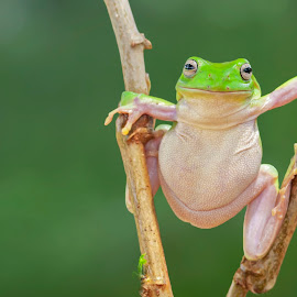 Wazzap dude...? by Aditya Permana - Animals Amphibians