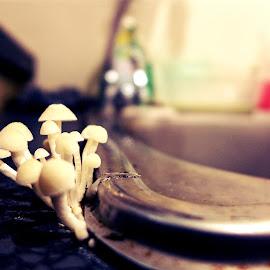 Mushroom At The Sink by Azhar Aziz - Nature Up Close Mushrooms & Fungi ( mushroom, sink, wash basin, shroom )