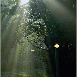 Morning Sun Rays by Sue Baxter Fitz - City,  Street & Park  City Parks (  )