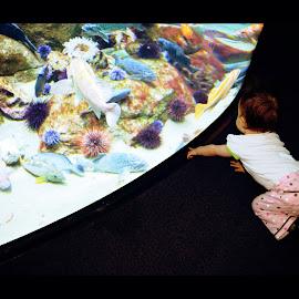 Toddler Aquarium  by Paul Turner - Babies & Children Children Candids ( toddler aquarium )