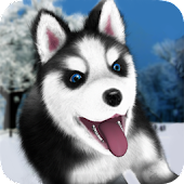 Talking Husky for Lollipop - Android 5.0