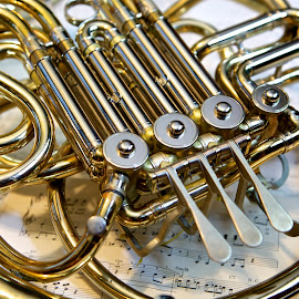 French Horn by Michelle Latouf - Novices Only Objects & Still Life ( music, musical, frenchhorn, horn, french, instruments )