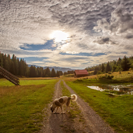 Lost the herd by Stanislav Horacek - Landscapes Prairies, Meadows & Fields