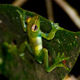 Amphibians of the World