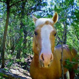 by Samantha Linn - Animals Horses (  )