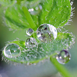by Hendar Vw - Nature Up Close Natural Waterdrops