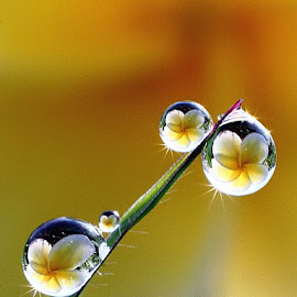 dews...dews.... by Dedy Haryanto - Nature Up Close Natural Waterdrops