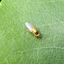 Yellow fly. Mosca amarilla