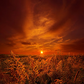 And The Sun Rose Yet Again by Phil Koch - Landscapes Prairies, Meadows & Fields ( vertical, wisconsin, ray, fine art, travel, phil koch, leaves, landscape, photography, sun, love, blue sky, sky, nature, autumn, horizons, flowers, light, flower, clouds, park, horizon, back light, scenic, morning, rural, shadows, field, red, dawn, color, sunset, fall, outdoors, meadow, trees, landscapephotography, beam, sunrise, landscapes, floral, mist,  )