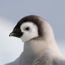 Penguin Gallery HD
